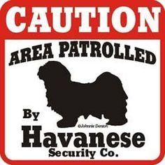 "Dog Yard Sign ""Caution Area Patrolled By Havanese Security Company"" by signs up. $10.45. This ""Caution Area Patrolled by "" Havanese sign is a great way to let everyone know you have a Havanese patrolling your property. The Caution Area Patrolled signs are screen printed on UV protected Styrene with UV inks. These 11"" x 11"" signs are weather resistant and suitable for outdoors. Made in the USA. Making them the best Havanese gift on the market."