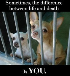 At least 25% of dogs in shelters are pure breeds. Never breed or buy while there are innocent lives at stake.
