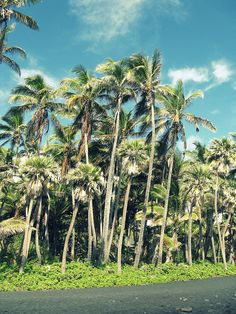 Have you ever seen a coconut grove?
