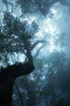 Blue through the trees