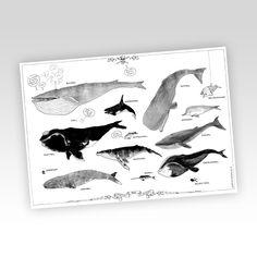 Image of Wale Plakat