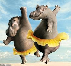 Hippo House Shoes | oh, are you envisioning something like this...?!? lol Or did you miss ...