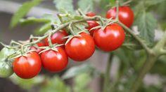 Mittel gegen Blattläuse, Spinnmilben und Mehltau