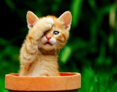 Cute and funny cute little kittens are 98 photos. Come, watch and share with friends.