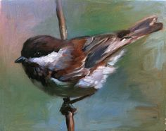 Chestnut-Backed Chickadee-Shauna Finn