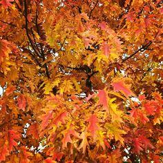 L'autunno ha anche colori incredibili e non solo 100 sfumature di grigio