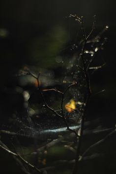 NMLA IVMM - Spiderweb