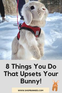 8 Things About Rabbit Care Guides and Tips! #rabbit Rabbit Behavior, Bunny, Teddy Bear, Tips, Animals, Landscapes, Rabbit, Animales, Cute Bunny
