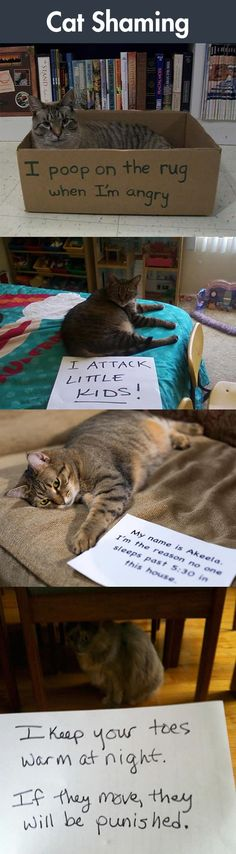 #funny #humor #cat #kitty #kitten #shaming