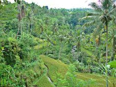 Gunung Kawi グヌン・カウィ Bali