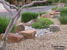 Xeriscaping Low Water Use Planting Display in New Mexico with large decorative landscaping rocks, different color and texture of ground cover gravel, and native and adaptive Southwest and Desert plants.