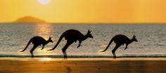 Espíritus libres saltando. - Sydney. http://soy.ph/SidneyViajes
