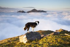 Border Collie, by Sven Soell (British Photography Awards).