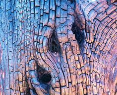 charred tree bark | Burnt tree bark - Stock Image E168/0063 - enlarged - Science Photo ...