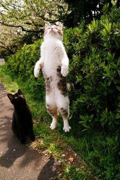 La apoteósis | Las 100 fotos más importantes de los gatos de todos los tiempos