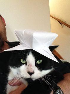 Cat in a hat...