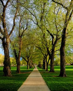 The Oval, CSU Spring. I'll never forget the first time I saw it in the Fall of 1979... Love at first sight, breath, and heartbeat.  I miss this place.