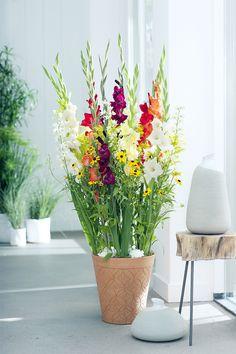 Hochgewachsene Gladiolen sind ein Blickfang. #tollwasblumenmachen