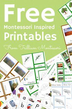 Free Montessori Printables from Trillium Montessori #Toddlerphonics