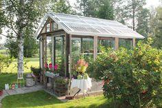 Lenan puutarha : Heinäkuun kurkistus kasvihuoneeseen: Mitä sieltä löytyy?
