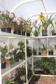 Image result for diy cheap orchid shade house