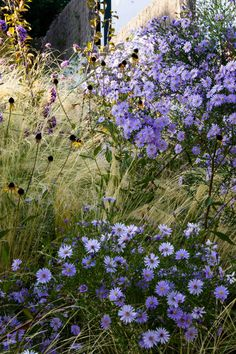 Aster Little Carlow , Rudbeckia and Stipa