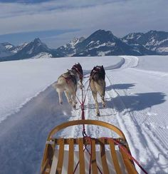 Mein erster Tag mit Huskies Husky, Camel, Animals, First Day, Animales, Animaux, Animal Memes, Husky Dog, Animal