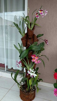 orchids by mail Orchid Planters, Orchid Pot, Orchids Garden, House Plants Decor, Plant Decor, Orchid Arrangements, Hanging Flowers, Orchid Care, Tropical Plants