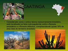 CAATINGA•   Considerado como o único bioma exclusivamente brasileiro,    está localizado na faixa sub-equatorial, entre a ...