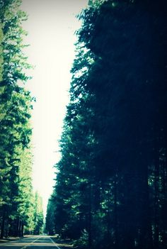 {Reverie Of An Old Soul Photography} #Oregon #road #forest
