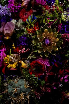 Makoto Azuma, Shunsuke Shiinoki photo exhibition 2012 Flowers - all those wonderful jewel tones! Dark Flowers, Exotic Flowers, Love Flowers, Beautiful Flowers, Wedding Flowers, Night Flowers, Wild Flowers, Art Floral, Floral Design