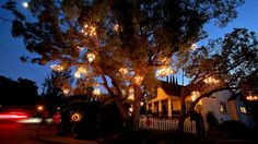 Chandelier Tree sparkles in Silver Lake
