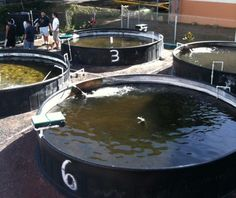 Bronx Couple Set Up a Sustainable Urban Fish Farm in 50-Gallon Recycling Bins.