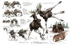 Brother Bear Character Designs by Terryl Whitlatch Animal Sketches, Animal Drawings, My Drawings, Drawing Animals, Terryl Whitlatch, Moose Pictures, Bear Character, Conceptual Drawing, Cartoon Cartoon