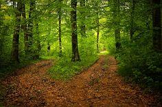 Chemin, Des Forêts, Nature, Saison