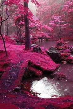 Pink Forest in Ireland Www.pinterest.com/thewinebottle