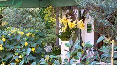 Nearby Restaurant. Restaurant, Plants, Diner Restaurant, Plant, Restaurants, Planets, Dining