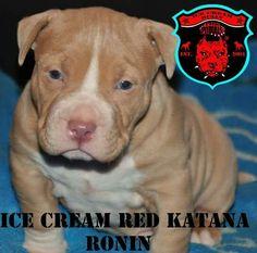 ICB-K ® Ronin
