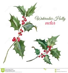 Illustration of Beautiful image with nice watercolor christmas holly flower vector art, clipart and stock vectors. Holly Plant, Holly Leaf, Illustration Botanique, Plant Illustration, Poinsettia, Flower Vector Art, Holly Flower, Christmas Drawing, Watercolor Christmas