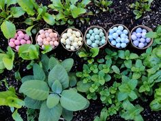 """Seed bombs began as a fun and friendly tactic for greening abandoned lots in urban spaces. """"Guerrilla gardeners"""" throw balls of seeds and fertilizer into fenced-off spaces that are otherwise neglected, such as brownfields or land in zoning limbo.  Seedles."""