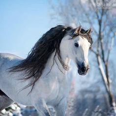 Stunning Grey Horse
