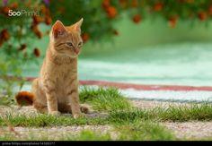 Small feline / pequeño felino - stock photo