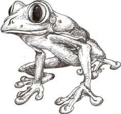 A pen and ink. Just felt like drawing. Animal Sketches, Animal Drawings, Art Sketches, Frog Illustration, Frog Drawing, Frog Tattoos, Frog Art, Cute Frogs, Drawing Projects