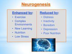 Exercise enhances neurogenesis and decreases depression