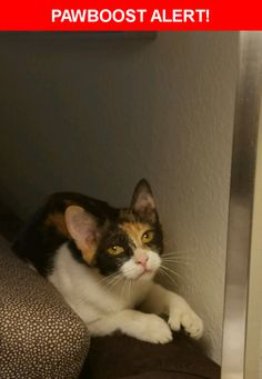 Please spread the word! Buttercup was last seen in Gainesville, FL 32608.  Description: Lost at Residence Inn near Target, calico cat with extra toes. Does not answer to her name. Somebody found her & posted an ad on Craigslist to give her away so she is gone now  Nearest Address: Residence Inn near Target Gainesville FL