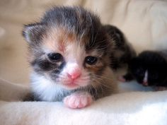 All Animals | Cute Pet Share