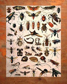 EL ATAQUE DE LOS INSECTOS << LOS REPELENTES>> #mosquitos #insectos #repelentes