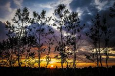 Birch Fire by Mark M
