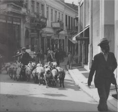 Evangelistrias street, Herd of sheep Greece Pictures, Old Pictures, Old Photos, Vintage Photos, Time Pictures, Old Greek, Greece Photography, Photographs Of People, Athens Greece