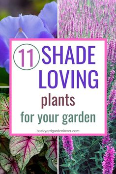 Are you looking for shade-loving plants for your front yard, or your porch, or even for containers? If so, you'll love these: they thrive in low light and are the perfect addition to your flower garden. Shade Landscaping, Landscaping Plants, Front Yard Landscaping, Landscaping Ideas, Front Porch Landscape, Front Porch Plants, House Landscape, Front Porch Flowers, Front Porches